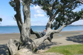 Wed barely arrived at the beach, when Eli disappeared. After some searching, I found him lying in a tree, soaking in the scenery!